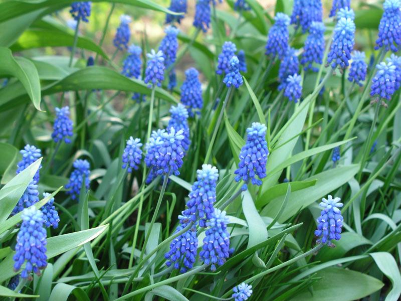 Удачным примером светолюбивых растений являются так называемые.